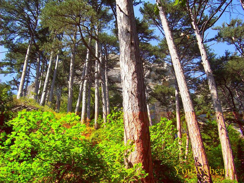Лес около водопада Учан-Су