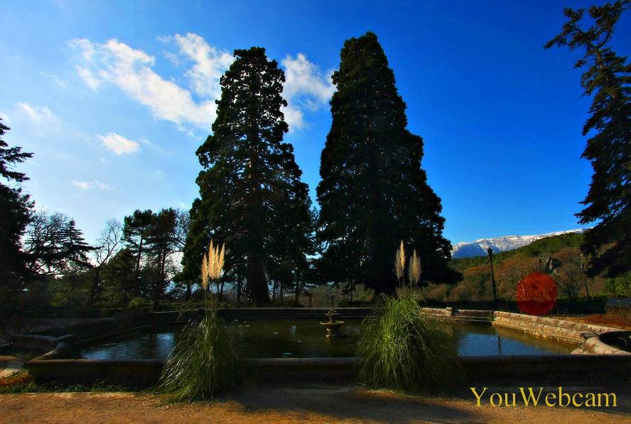 Два больших высоких дерева на территории парка Массандровского дворца