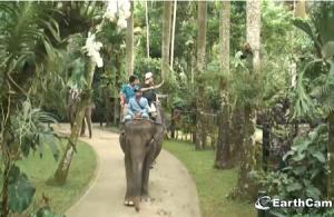Парк Слонов на острове Бали в Индонезии