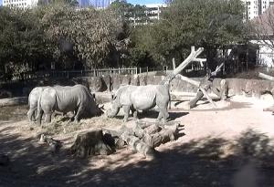 Носороги и зебры в зоопарке Хьюстона в Техасе