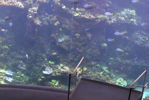 Филиппинский коралловый риф в Калифорнийской академии наук в Калифорнии