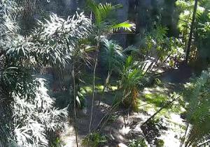 Тигры в зоопарке Сан-Диего в Калифорнии