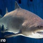 Акулы в Тихоокеанском Аквариуме в Лонг-Бич
