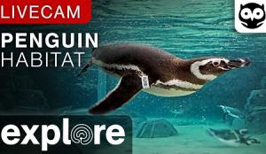 Пингвины под водой в Тихоокеанском Аквариуме в Лонг-Бич