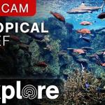 Тропический Риф в Тихоокеанском Аквариуме в Лонг-Бич