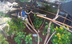 Ленивцы в зоопарке Гонолулу на острове Оаху
