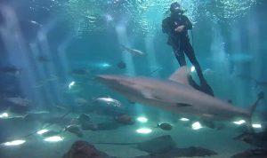 Аквариум Океанического центра Мауи