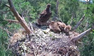 Гнездо солнечных орлов в Ульяновской области