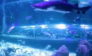 Rio-de-ZHanejro-okeanarium-AquaRio-Okeanicheskij-akvarium