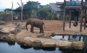 Cлоны в зоопарке Таронга в Сиднее