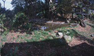 Тигры в зоопарке Таронга в Сиднее